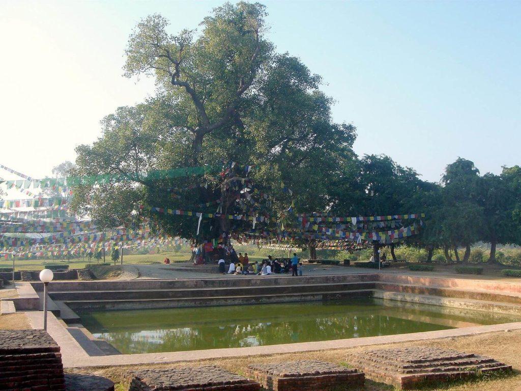 仏教4大聖地ルンビニーの池